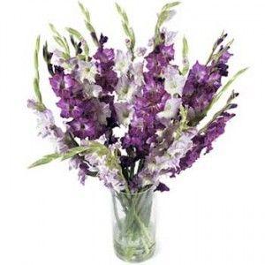 Colors Of Gladiolus Birthday Flowers Arrangements Rose Vase Wedding Flowers