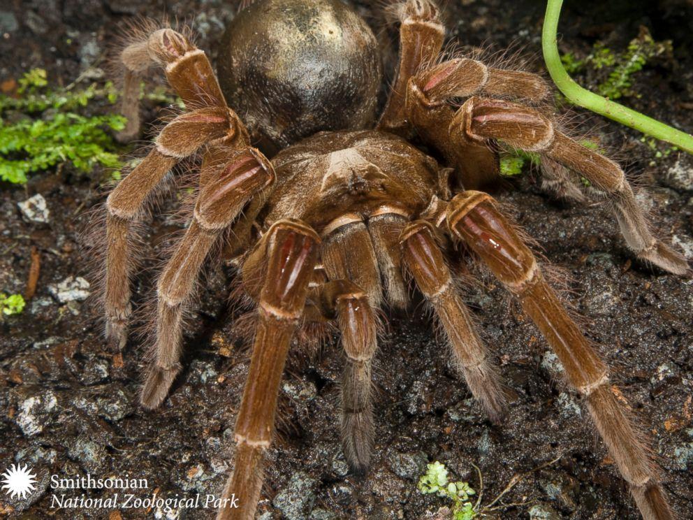 47+ Puppy spider info
