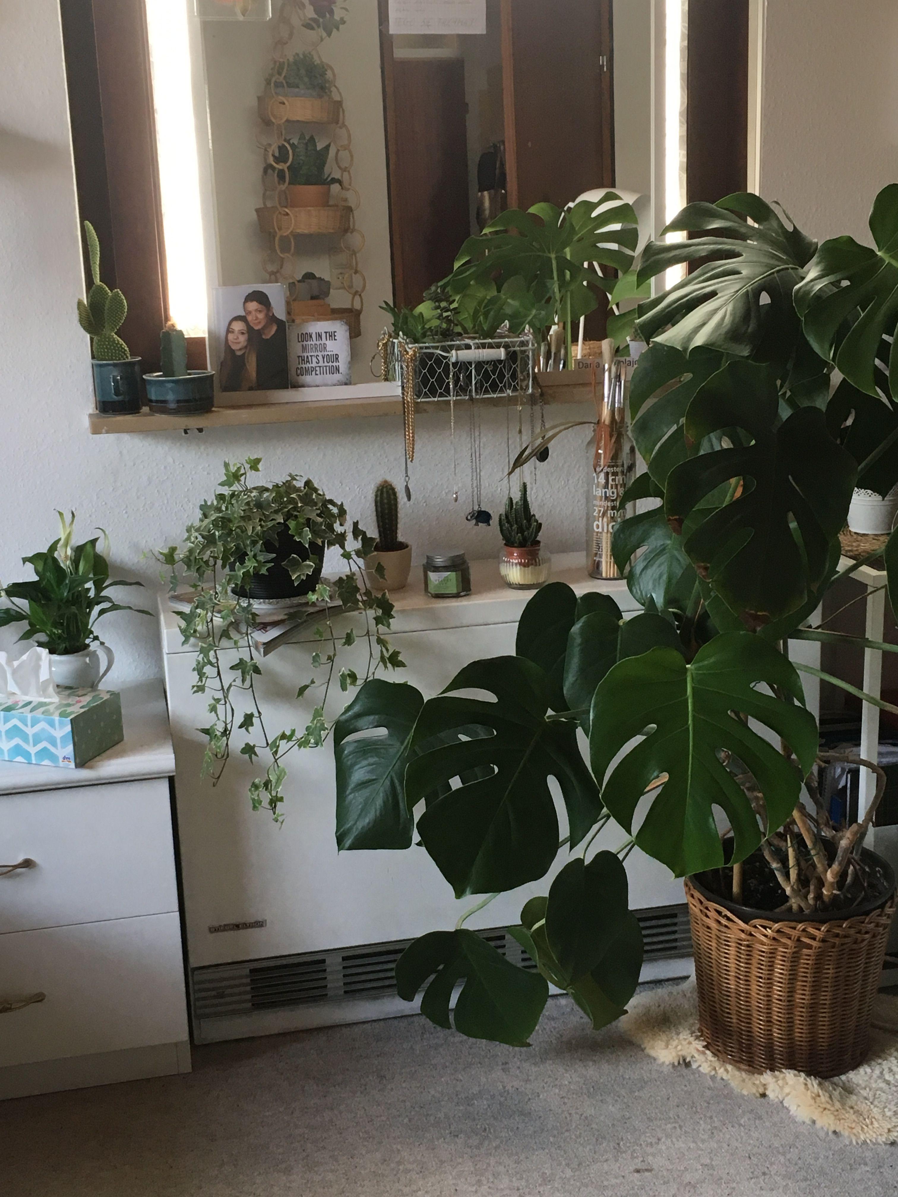 Indoor Live Trees