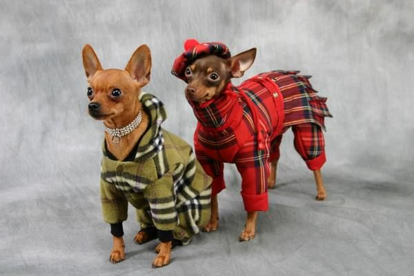 Tiny Celebrity Dogs & High Fashion Dog Pictures - Dog Central