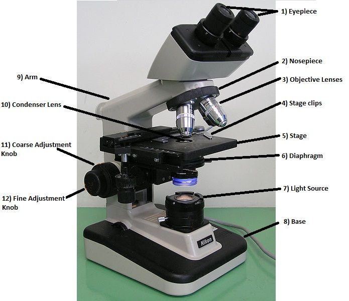 Parts And Functions Of A Light Microscope Part Ii Microscopic