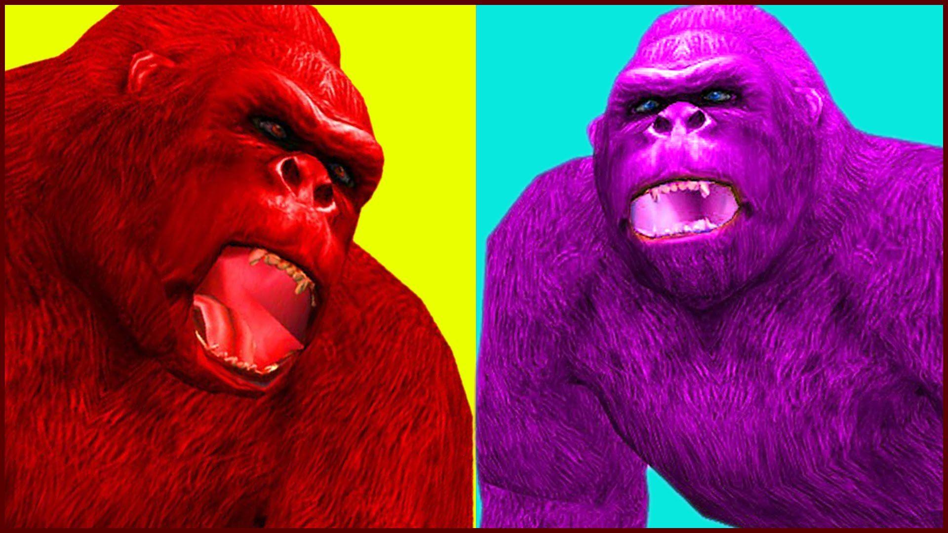 King Kong Colors Finger Family Nursery Rhymes | Gorilla Animal Fing ...