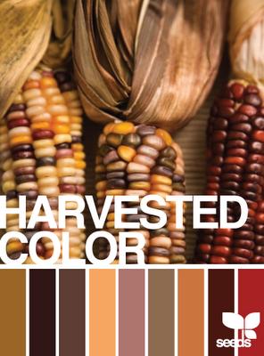 Harvested Color pallette