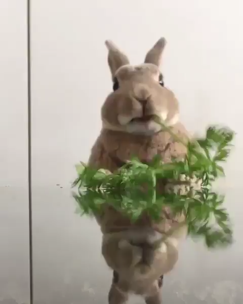 What Do Rabbits Like To Chew On (Rabbit Chew Toy Guide) #thepetsupplyguy #pet #pets #animal #rabbit #rabbits #bunny #bunnies Video Credit: Bunny Nom Nom Stem & Leaf @and_olive_ on IG
