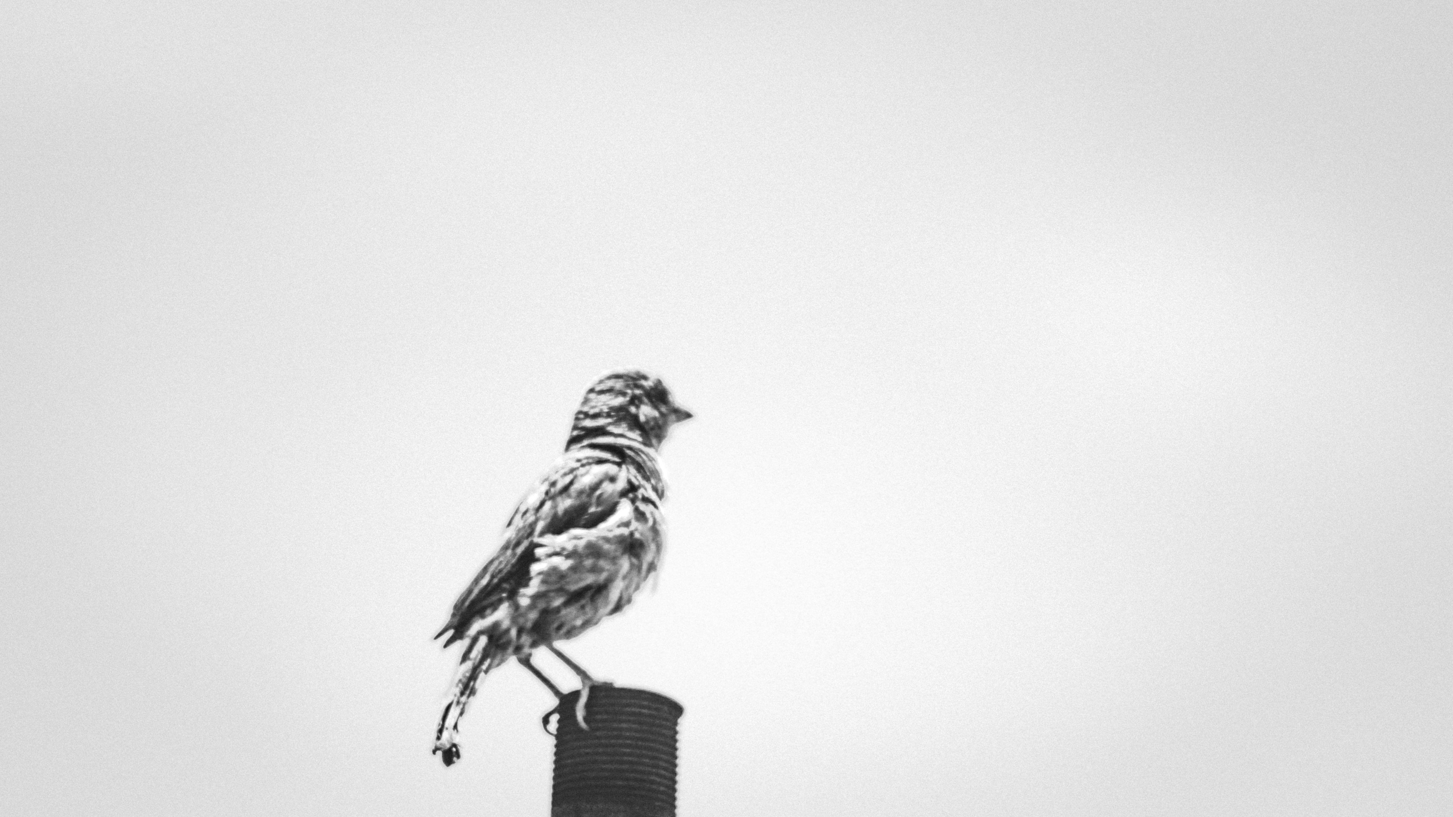 Mirando A La Nada! -adan Sanchez- #ave #pájaro #blanco Y