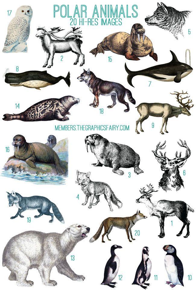 Polar Animals Image Kit! TGF Premium Polar animals