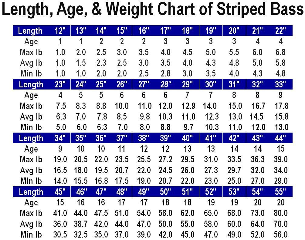 length age weight chart for striped bass jpg fishing