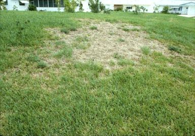 What S Bugging Your Lawn Irregular Patches Of Damage Could Mean