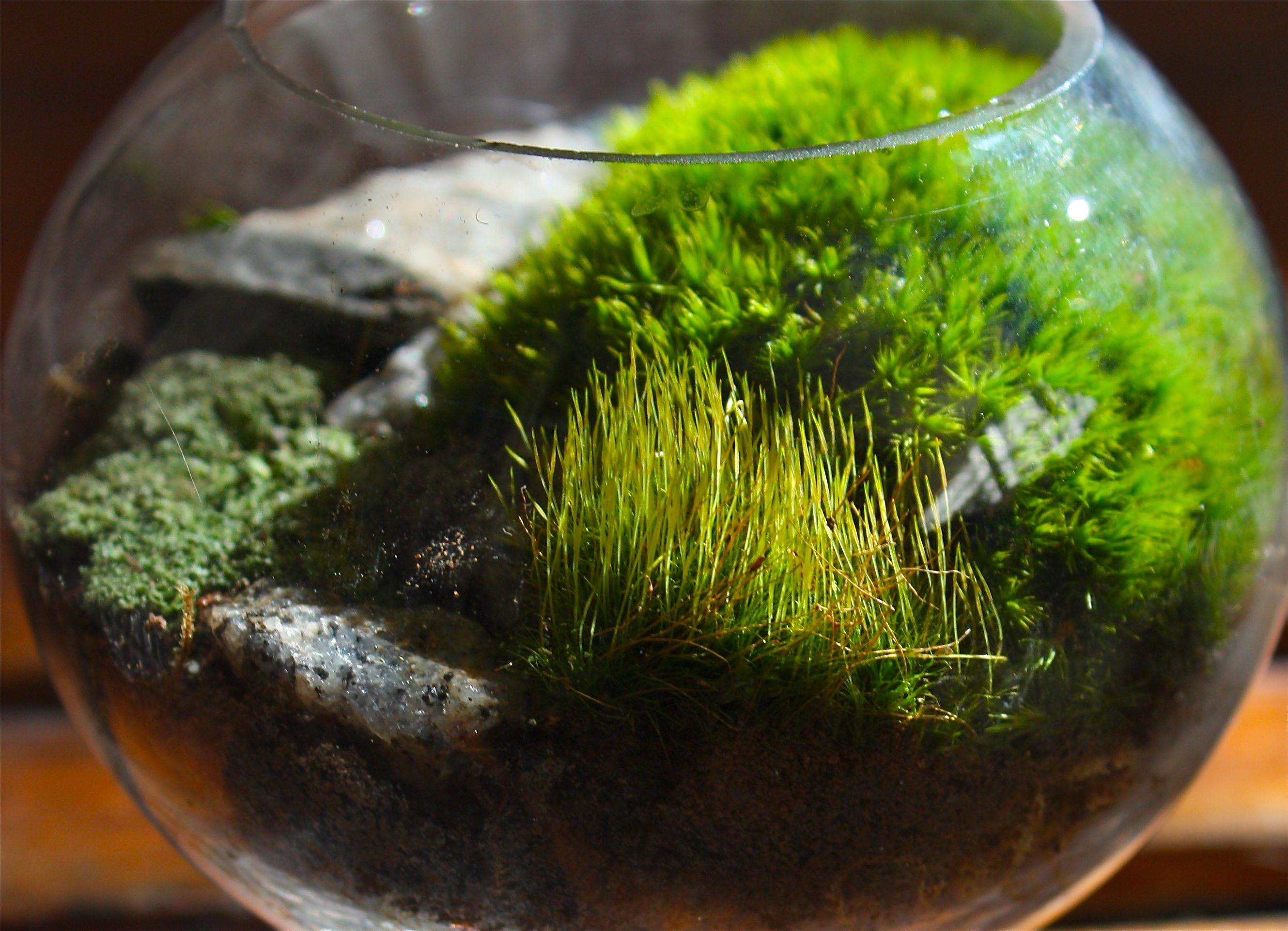 diy moss terrarium crafthubs pinteres. Black Bedroom Furniture Sets. Home Design Ideas