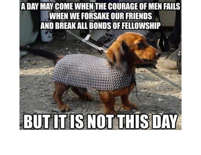Yes This Is Dog 31 Of The Best Dog Memes Ever Slide 68 Pawsome Funny Dog Pictures Funny Dog Memes Dog Memes