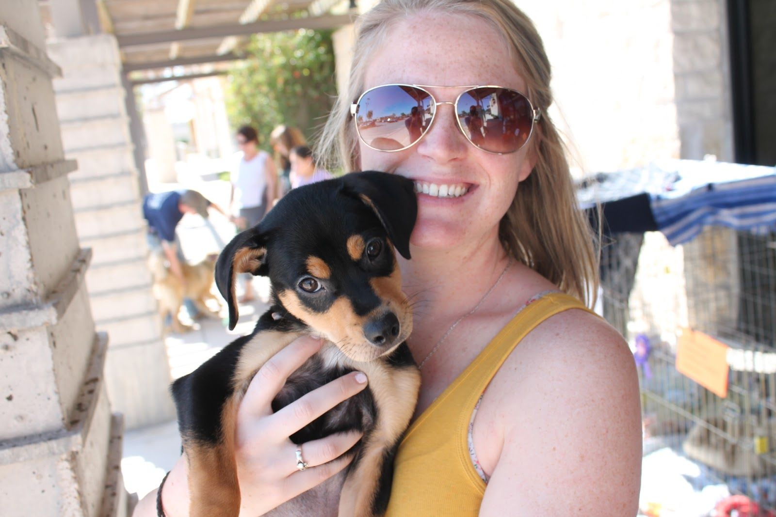 Rottweiler Chihuahua Mix Chihuahua Dogsmixes Pinterest