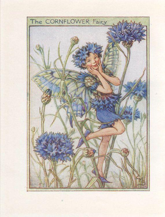 Flower Fairies: THE CORNFLOWER FAIRY Vintage Print c1930 by Cicely Mary Barker