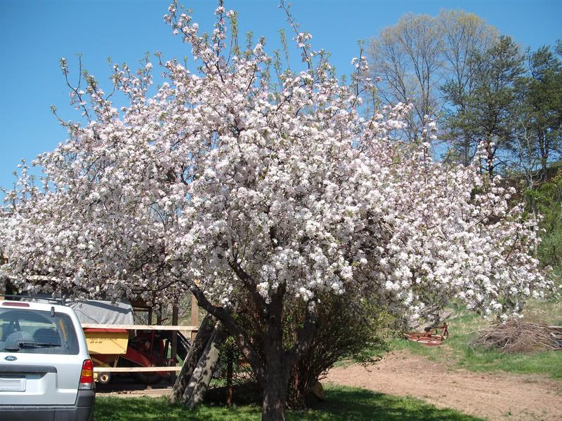 How To Grow Cherry Trees In Containers Cherry Trees Garden Garden Guide Cherry Tree
