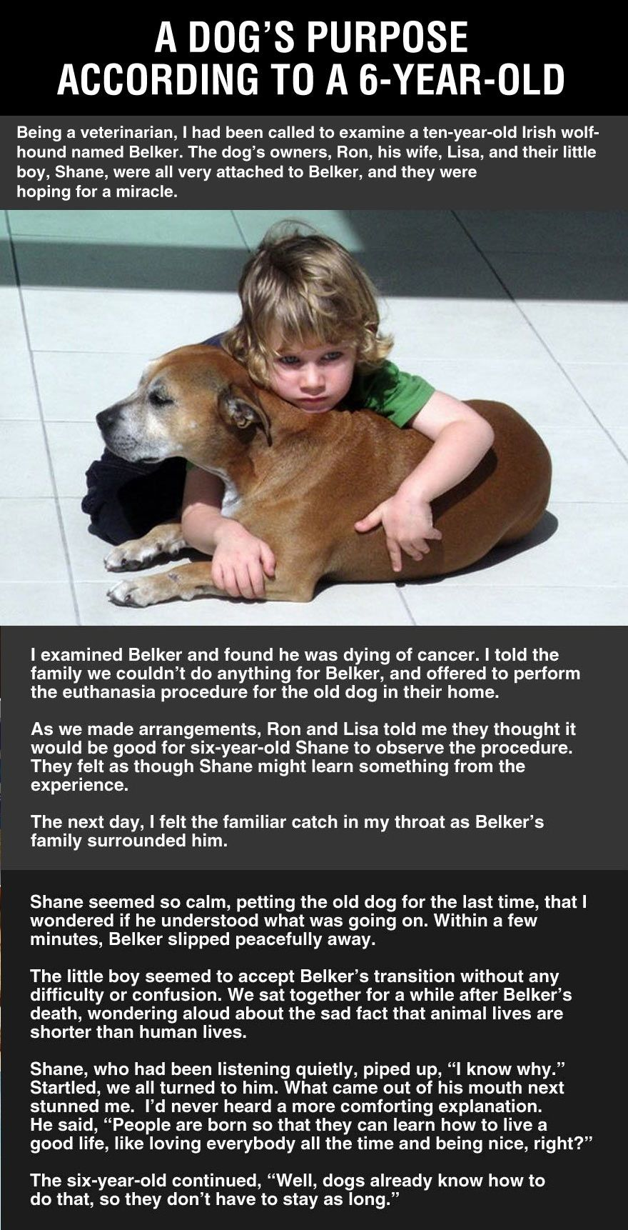 A Dog S Purpose According To A 6 Year Old A Dogs Purpose Dog