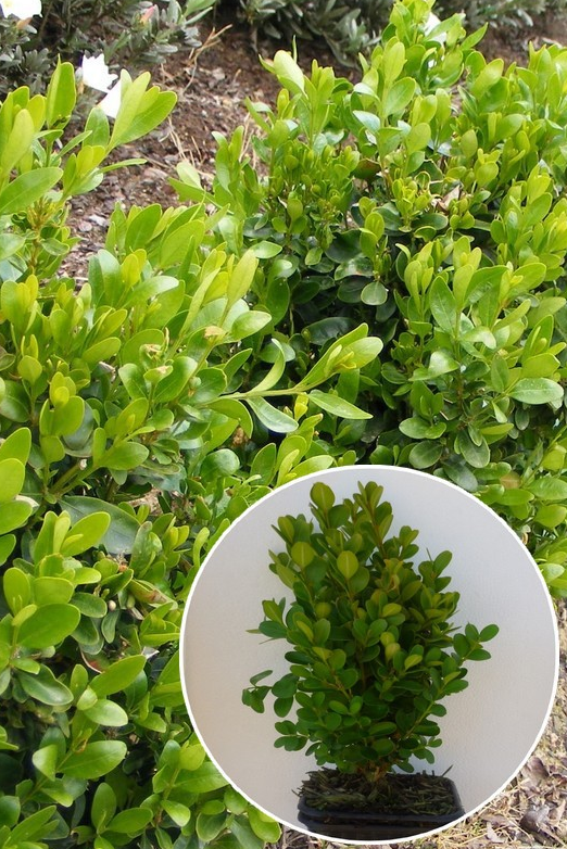 plante brise vue terrasse agrable plante brise vue pour terrasse plante brise vue pour. Black Bedroom Furniture Sets. Home Design Ideas