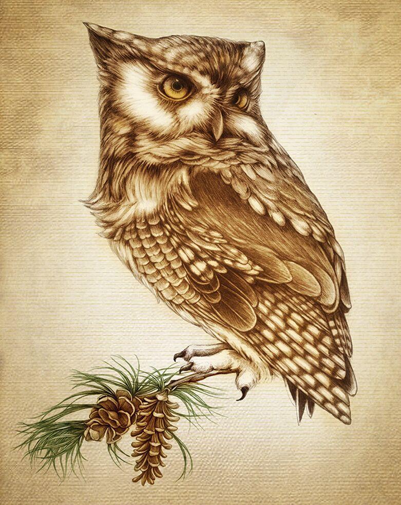 Screech owl notecard by Laura Zindel