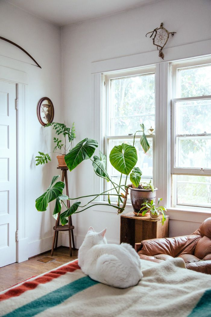 Schlafzimmer  apfelkiste, pflanze drauf Next home- actual plans - schlafzimmer pflanzen