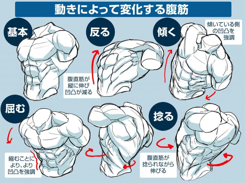 イラスト豆知識かっこいい腹筋の描き方 ビジネスアニメ Drawings