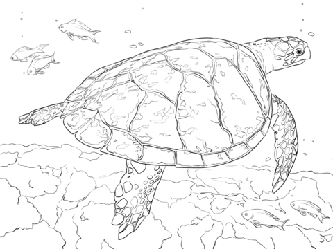 Realistic Hawksbill Sea Turtle Coloring Page From Turtles Category