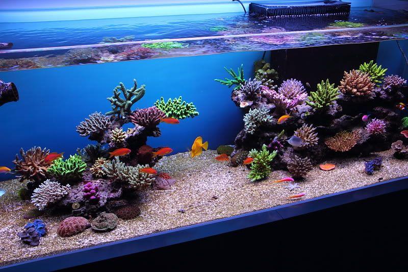 Perfect Top Reef Tank Aquascapes | Re: RSM 130D Top Aquascapes/FTS
