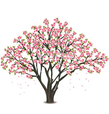 cartoon japanese cherry blossom treejpg 380400 - Cherry Blossom Tree Coloring Pages