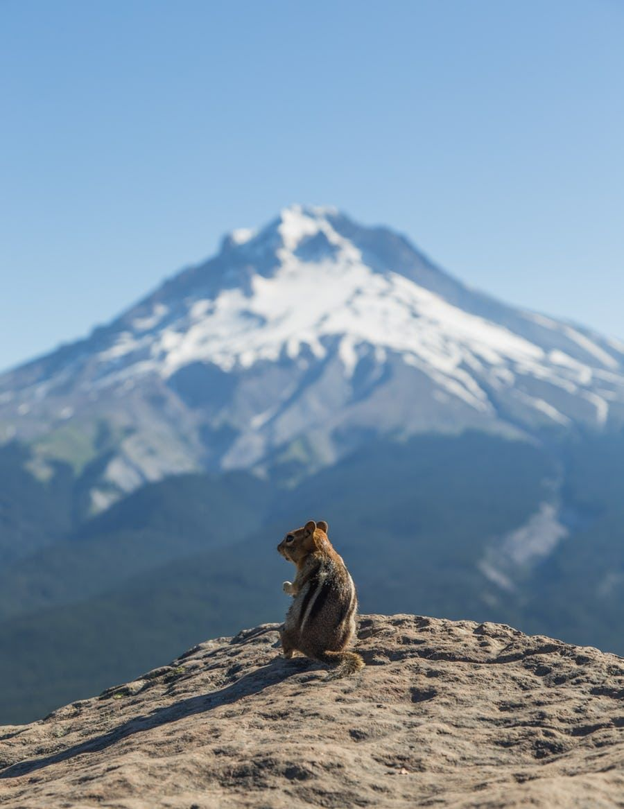 Photo of The Best 7 Hikes Within 90 Minutes of Portland