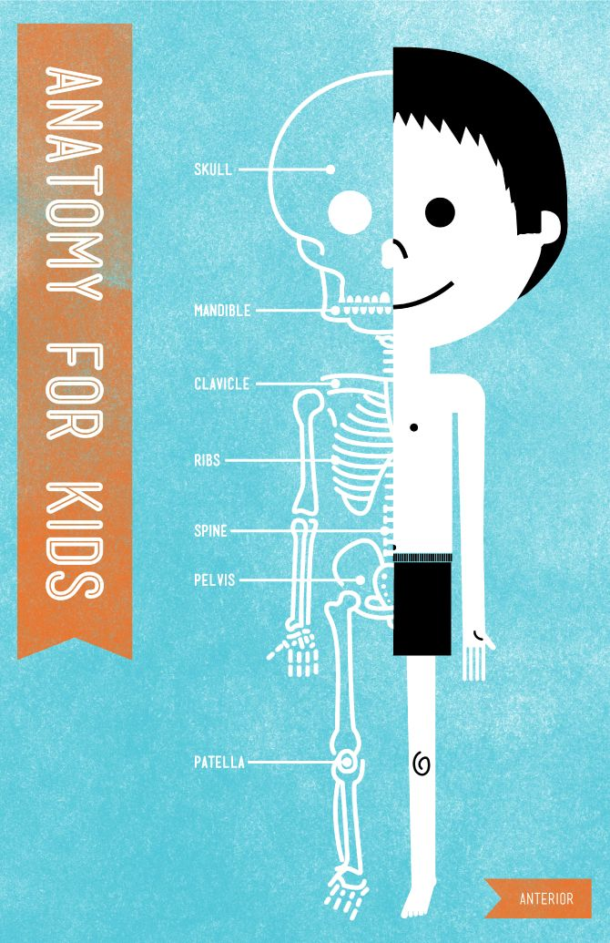 Anatomy Pictures For Children Anatomy Pictures For Children Anatomy
