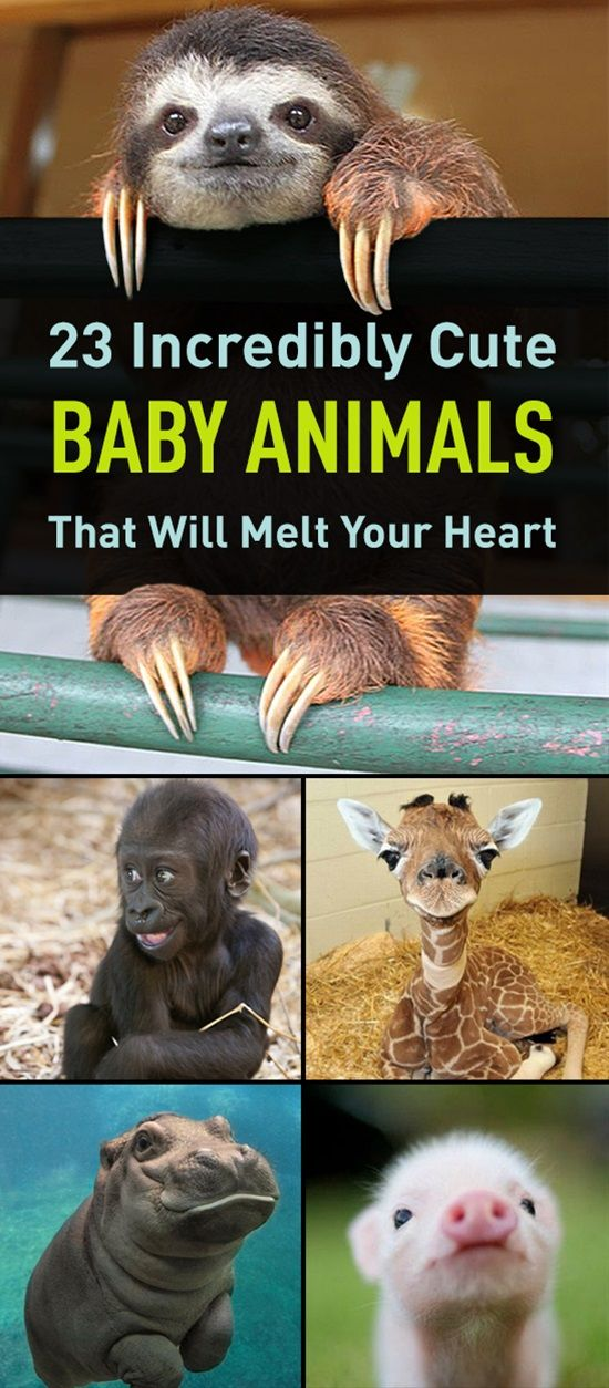 Incredibly Cute Baby Animals That Will Melt Your Heart Baby - 28 cute baby animals will melt heart