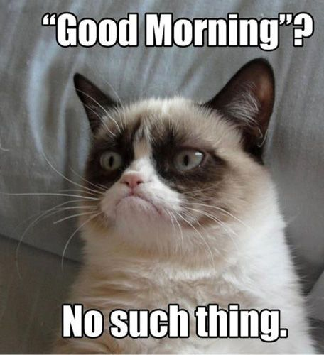 Good Morning Funny Coffee Meme : Grumpy cat good morning no such thing internet trash