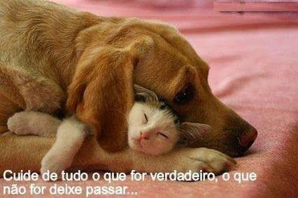Amizade verdadeira é assim