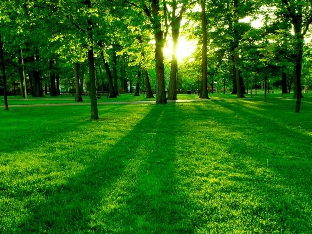 Fields Of Green Wallpaper With Images Green Nature Wallpaper