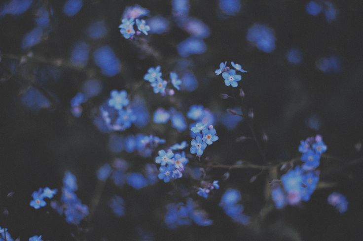 blue flowers tumblr - Pesquisa Google | Wallpaper ...