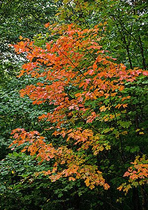 First day of fall 2012: Autumnal equinox is here #autumnalequinox