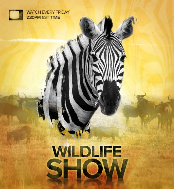 Design A Professional Wildlife Tv Show Poster Poster Design Tutorials Poster Tutorial Photoshop Poster Design