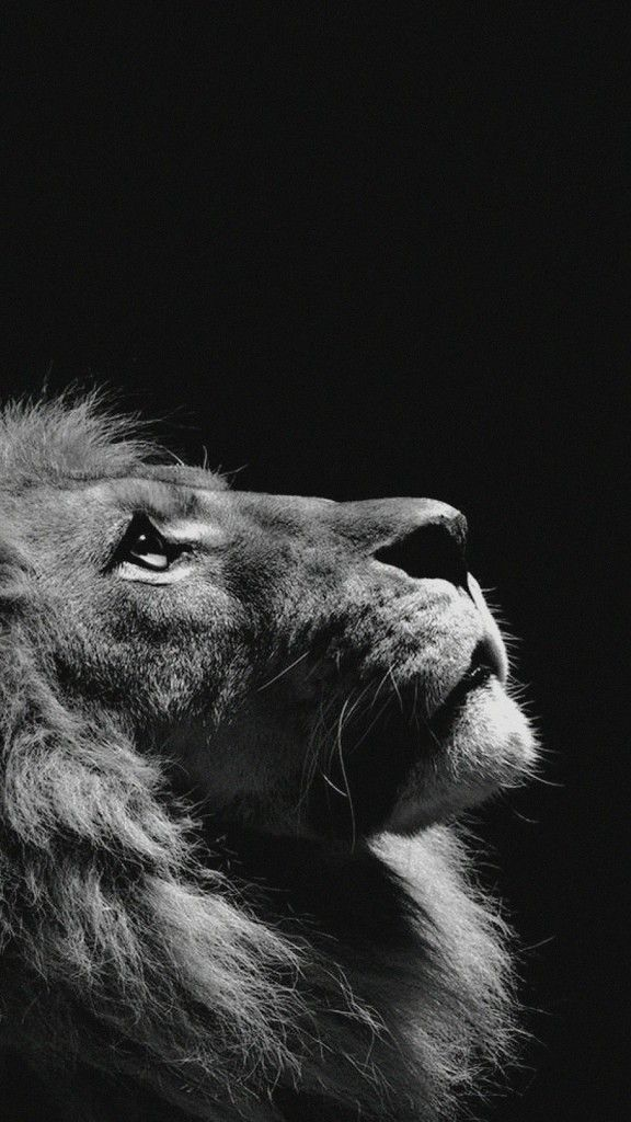60 Amazing Animal Iphone Wallpaper Free To Download Lion Photography Animals Black And White Lion Wallpaper