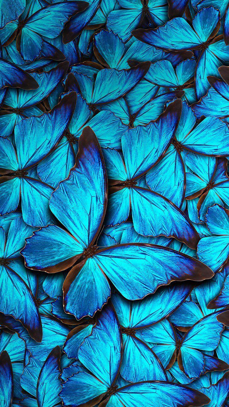 Blue Butterflies Wallpaper Blue Butterfly Wallpaper Butterfly Wallpaper Iphone Butterfly Wallpaper Backgrounds