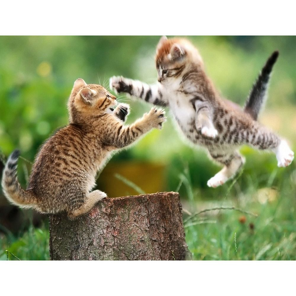 Needlework Diy Diamond Painting Pasted Painting Animals Square Drill Fashion Wall Stickers Home Decor Embroide Cute Baby Animals Cute Kitten Gif Kittens Cutest