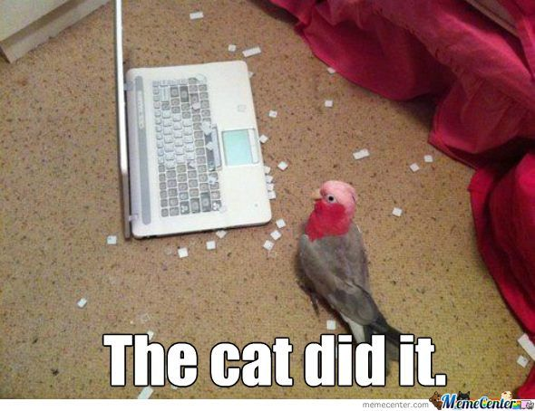The cat!!