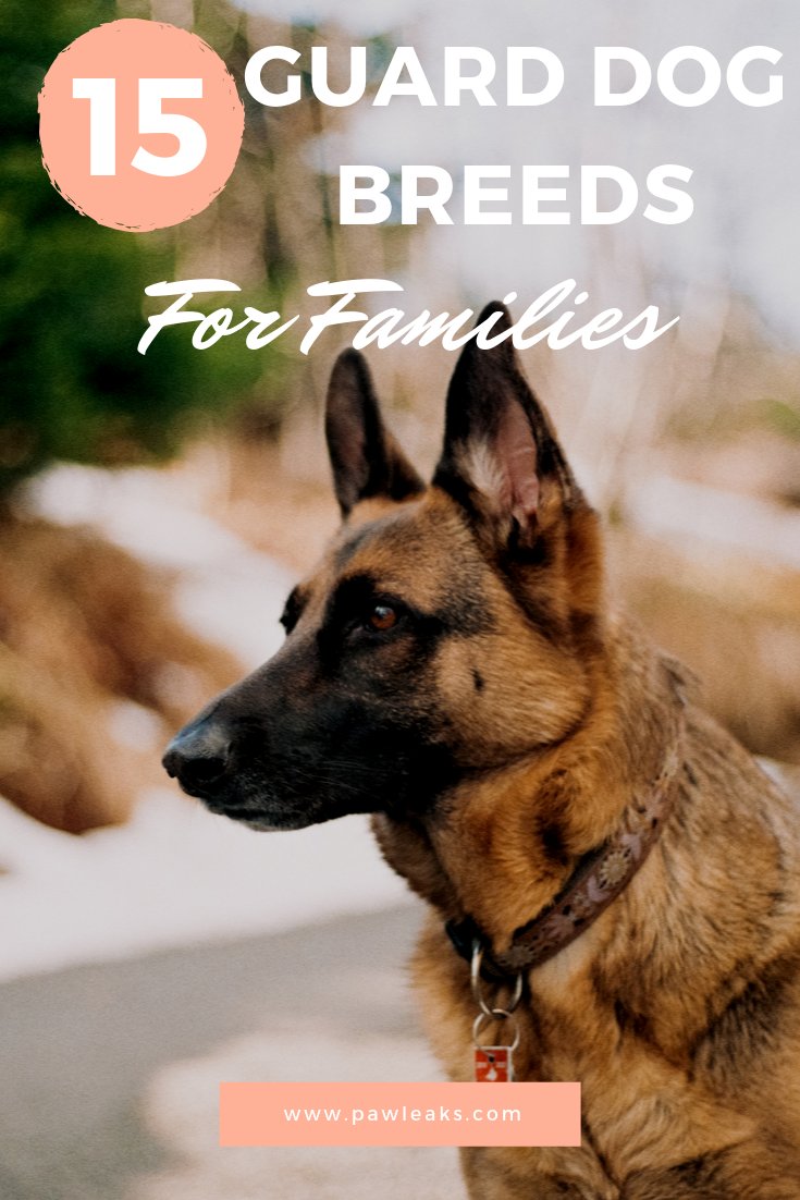 15 Best Guard Dogs For Families How