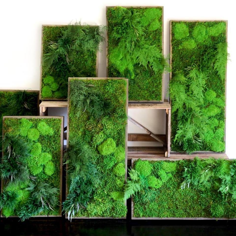 Pin de adriana prado en cuadros preservados pinterest - Cuadro jardin vertical ...