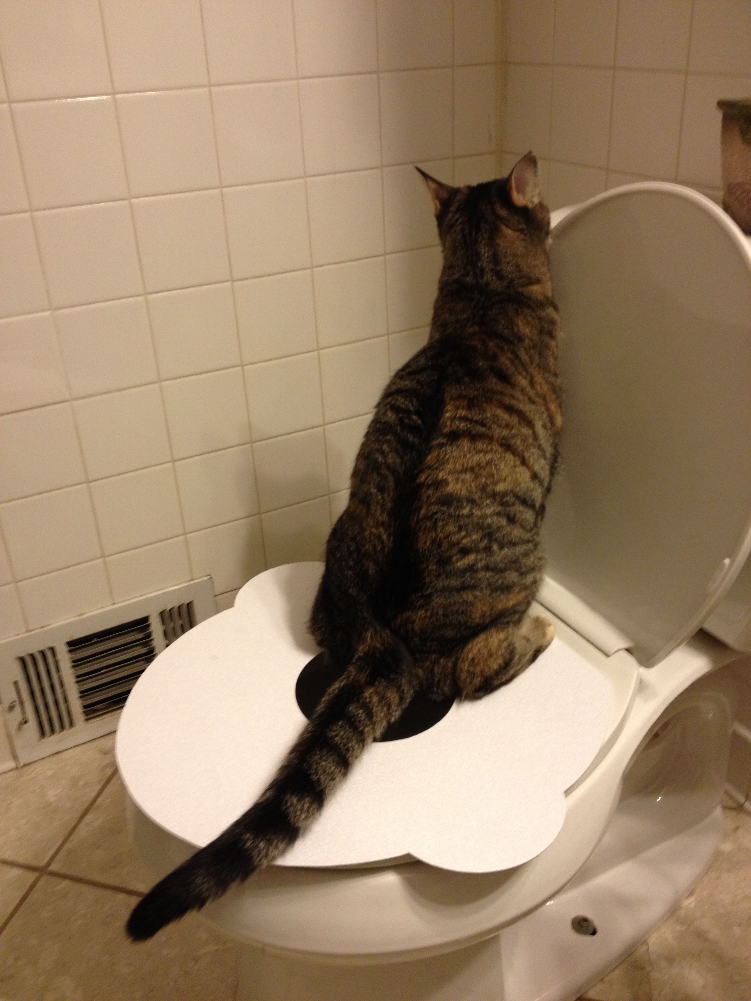 The Purrfect Potty, NO MORE LITTER! cats catproducts