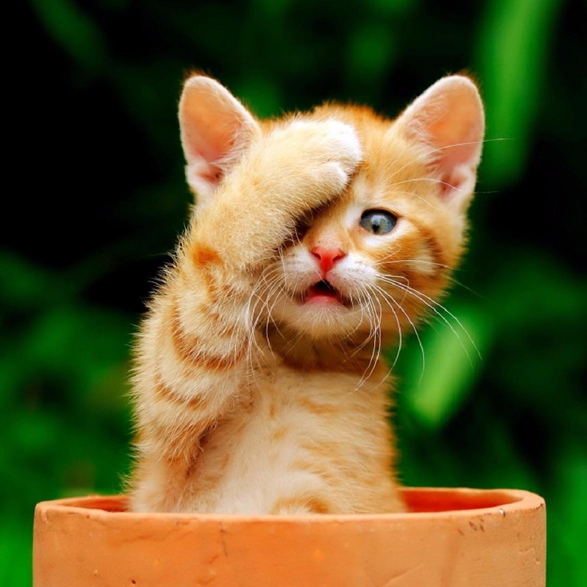 kittens - Google Search …