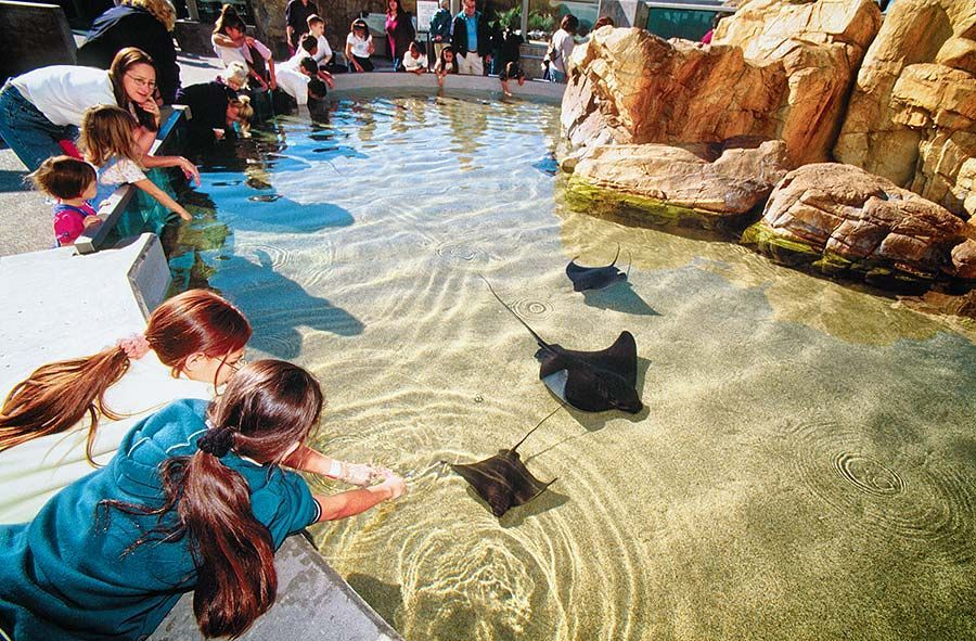 Aquarium Of The Pacific Exhibits Southern California Baja Gallery