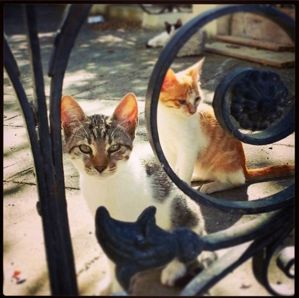 Cats in Santorini, Greece~