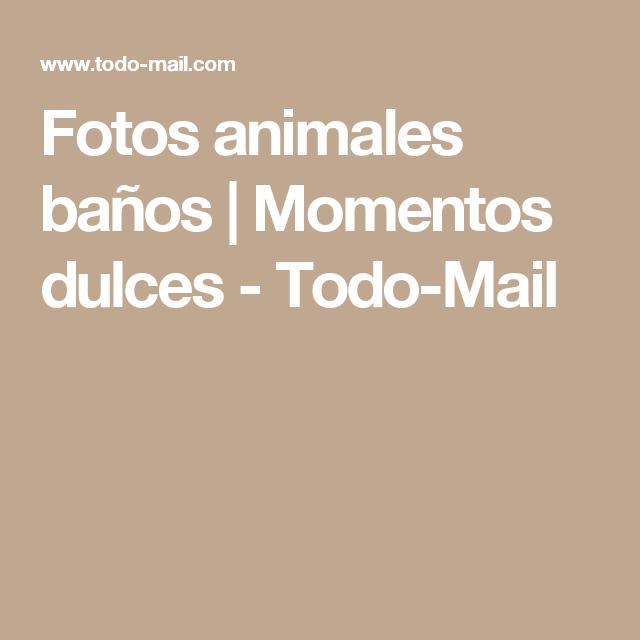 Fotos animales baños | Momentos dulces - Todo-Mail