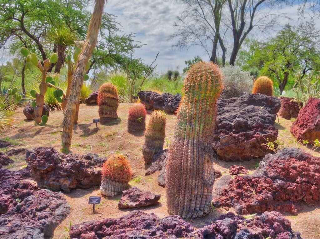 Botanical Cactus Gardens Las Vegas Nv