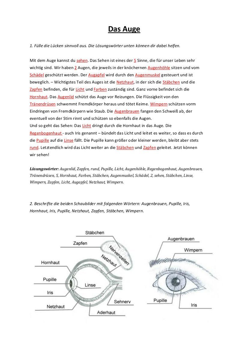 Arbeitsblatt Auge das Das Auge Arbeitsblatt Das Auge ...