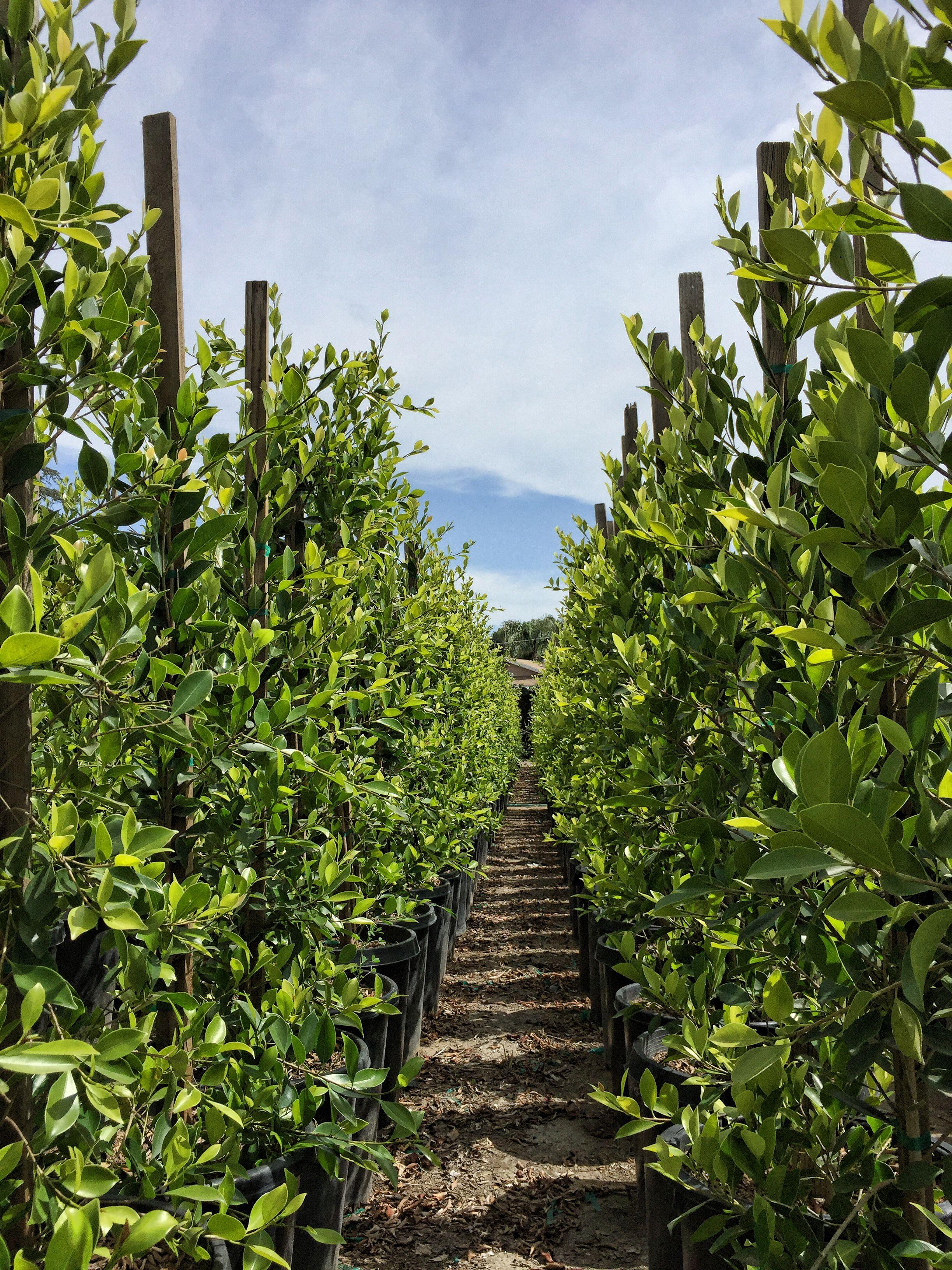AlvarezNursery #Panoramic #Plant #Plants #Landscaping
