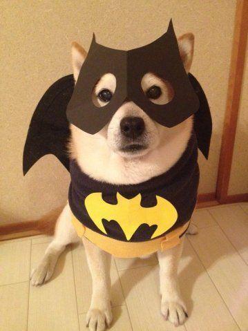 animal #cute #dog #cat #puppier #puppy #festival #christmas - halloween cute decorations