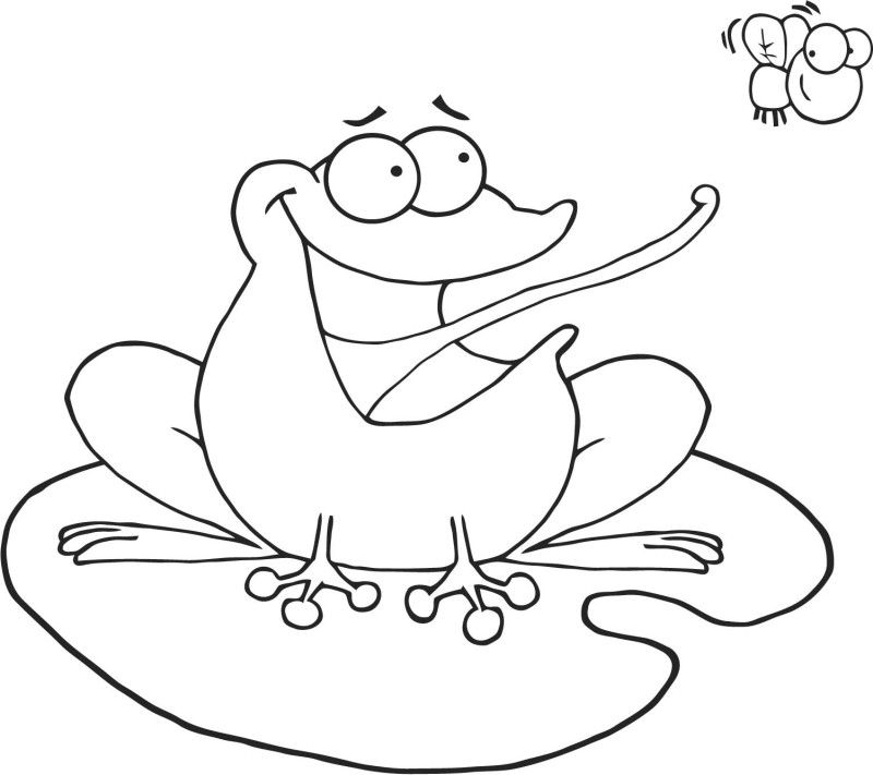 Frog Cacthing Fly Coloring Page Free Printable Coloring Pages